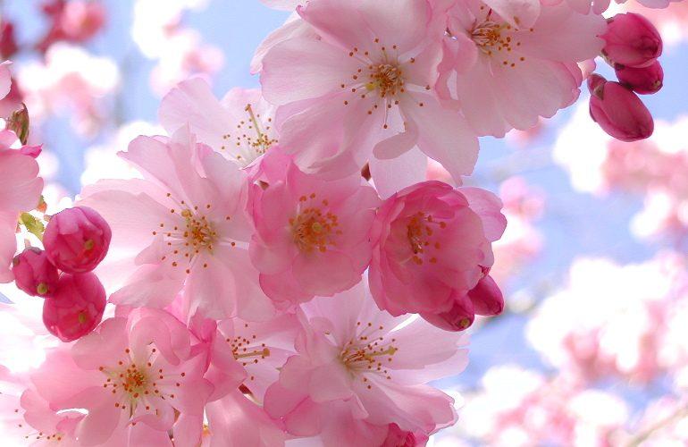 spring-feeling