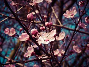 Всяка пролет води със себе си пролетна умора