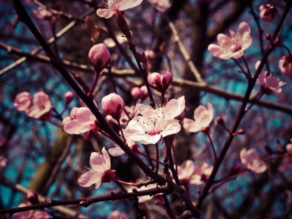 Пролетна умора – едно ново начало