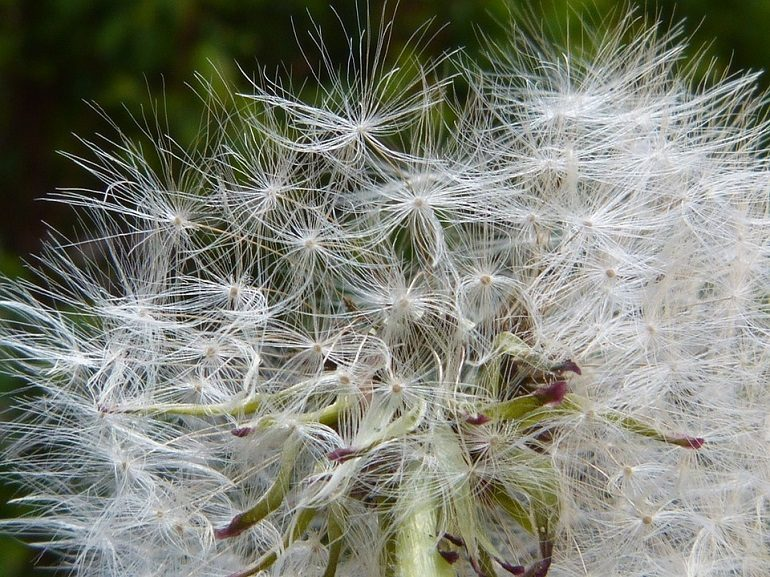 alergiya