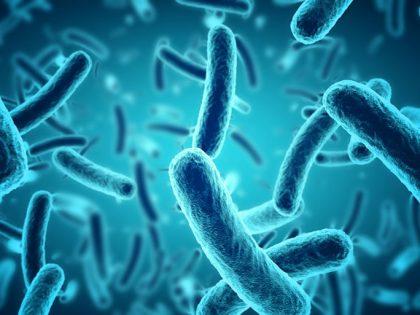 Про10Биотик – Пробиотици за силна имунна система